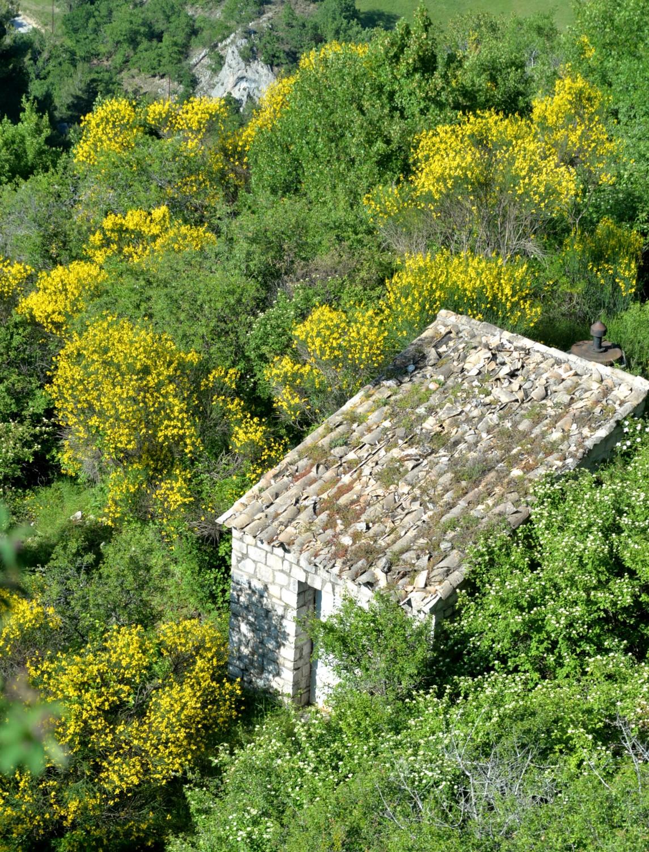 Condorcet en Drôme provençale